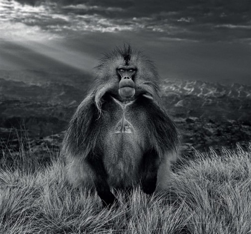 Members Only by David Yarrow
