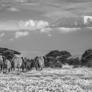 The Garden of Eden by David Yarrow
